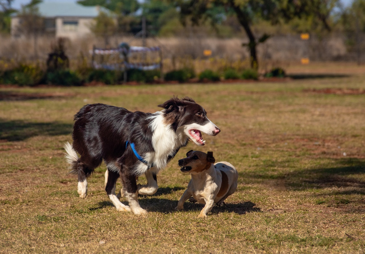 Training Sheepdogs